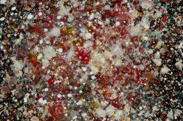 胞 Coral 1-2/海底、揺らぎ、刺胞、毒、捕食